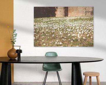 Gänseblümchen in Luxemburg von Laura Wienk