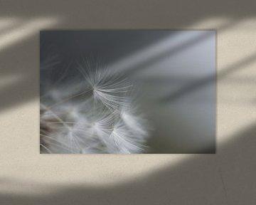 minimalistischer Löwenzahnflaum von Emajeur Fotografie