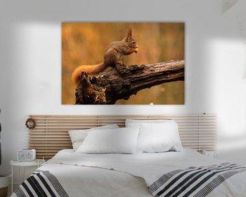 eekhoorn von roeland scheeren