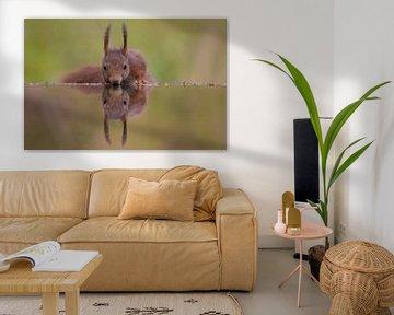 Eekhoorn van Robert Westerhof