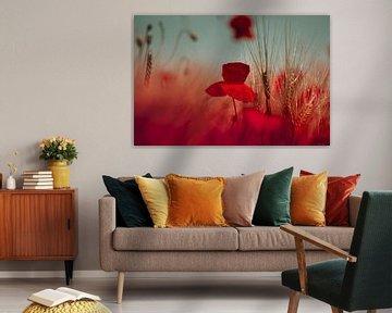 Poppy von Julia Delgado