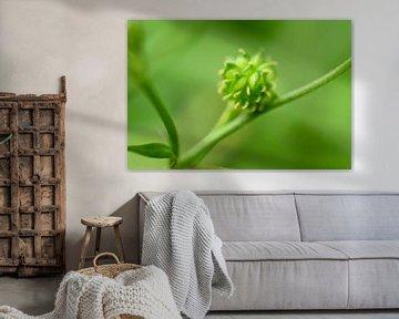Groene close up bloem von Myrthe Visser-Wind