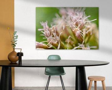 Roze close up bloem von Myrthe Visser-Wind