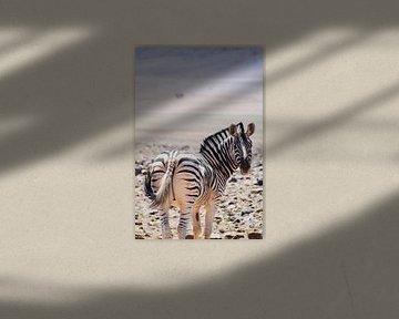 Zebra van Myrthe Visser-Wind