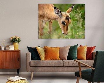Impala eet gras von Inez Allin-Widow