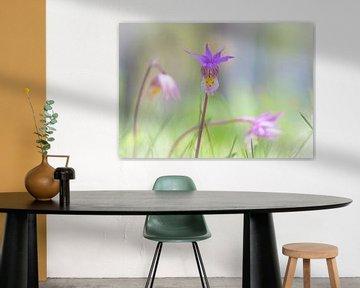 Wilde lila Orchidee von Rietje Bulthuis