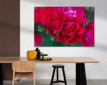 rote Rosen von Tania Perneel