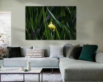 Gele lis in het riet van Kiezel Fotografie