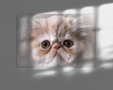 Persian cat von G. Tiemens