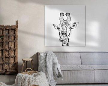 Giraffe von Felix Brönnimann