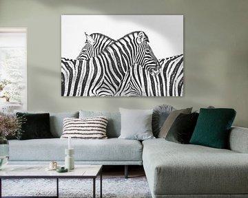 Zebra von Felix Brönnimann