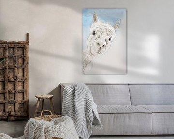 Das neugierige Alpaka von Natalie Bruns