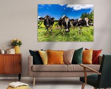 Hollandse koeien op São Miguel (Azoren) van Easycopters