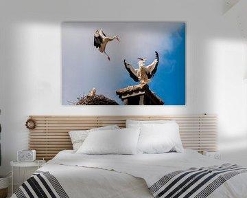 Storch van Felix Brönnimann