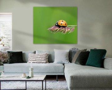 Lief Beestje... van Brigitte Alphenaar