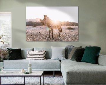 Zebra im Gegenlicht in Namibia van Felix Brönnimann