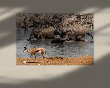 Wasserloch in Namibia von Felix Brönnimann