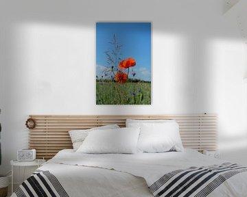 Grassen en klaprozen van Ostsee Bilder