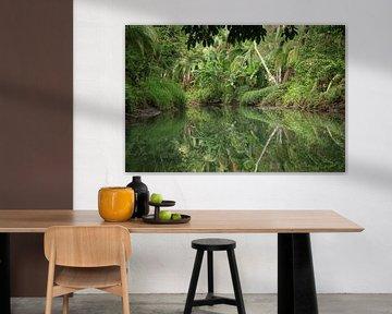 Mangrove Damas Island Costa Rica van Ralph van Leuveren