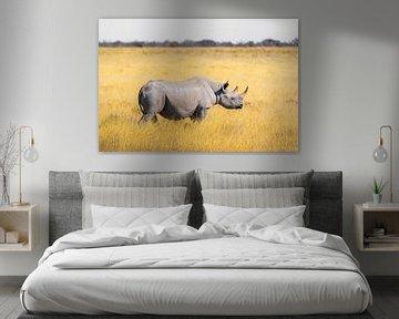 Nashorn von Felix Brönnimann