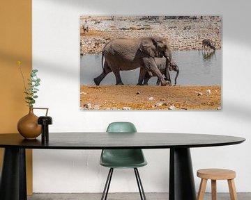 Elefanten von Felix Brönnimann