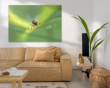 Salticidae Spinne II von Iris Volkmar
