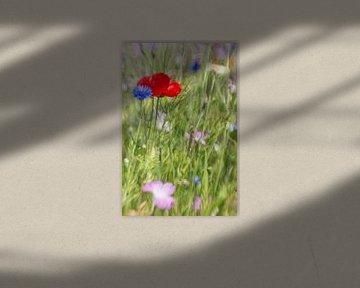 Klaproos & korenbloem van Wolbert Erich