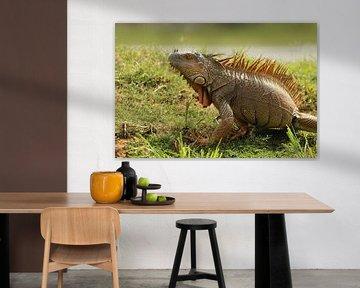 Leguan in Cano Negro Costa Rica von Ralph van Leuveren
