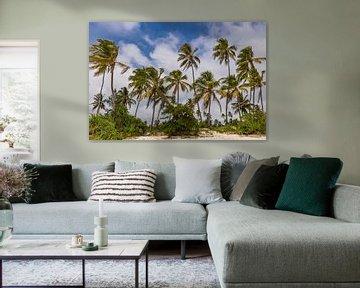 Palmbomen in Zanzibar