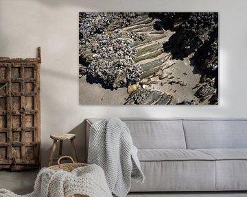 Schelpen en rots op het strand van Bretagne van Sandra van der Burg