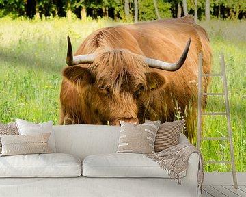 Schotse hooglander van Marcel Alsemgeest