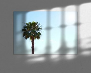 Eenzame palmboom