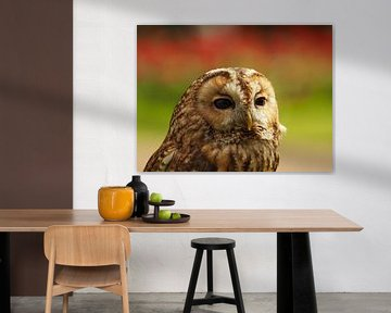 Tawny Owl Nahaufnahme von Wendy Drent