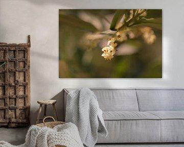 Olivenblüte von Tania Perneel