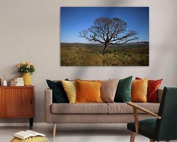 Amarula boom Zuid Afrika van Ralph van Leuveren