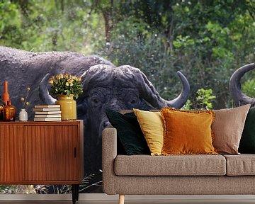 Buffel Hluhluwe Imfolozi parc Zuid Afrika van Ralph van Leuveren