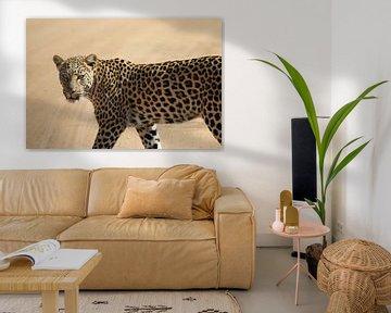 Luipaard Zuid Afrika van Ralph van Leuveren