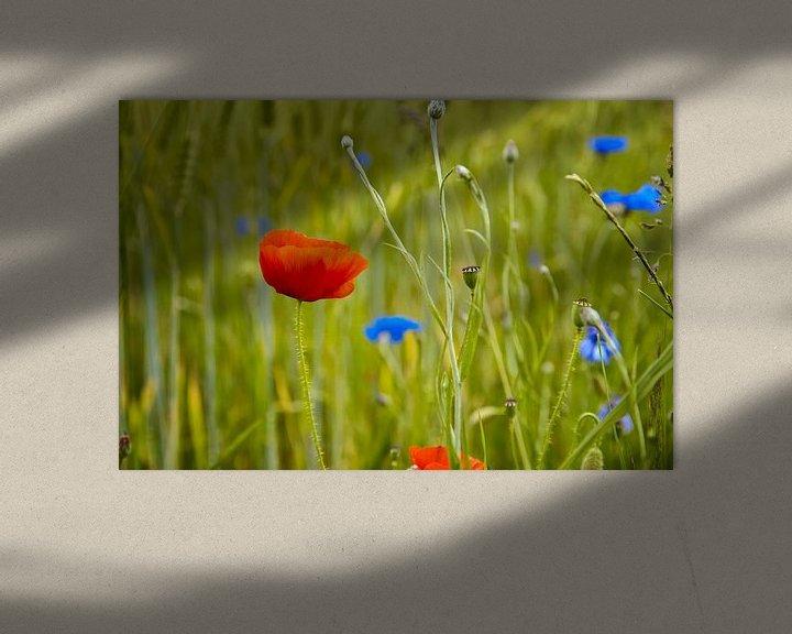 Impression: Coquelicot dans un champ de blé sur Jan Brons