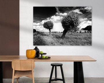 Bomen, Nederlands landschap (zwart-wit) van Rob Blok