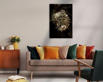 Light and dark with fragile flower von kitty van gemert
