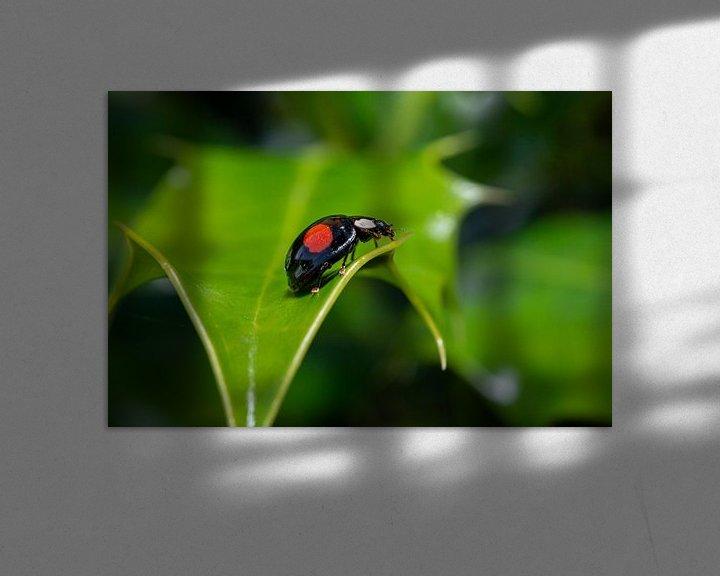 Sfeerimpressie: Lieveheersbeestje van Maurice Looyestein