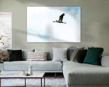 Europese kraanvogel