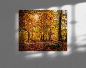 Herbstliche Buchenwälder im Naturpark Rheingau-Taunus bei Engenhahn sur Christian Müringer