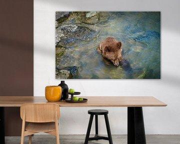 Junger Bär sucht Nahrung im Fluss, Alaska von Rietje Bulthuis