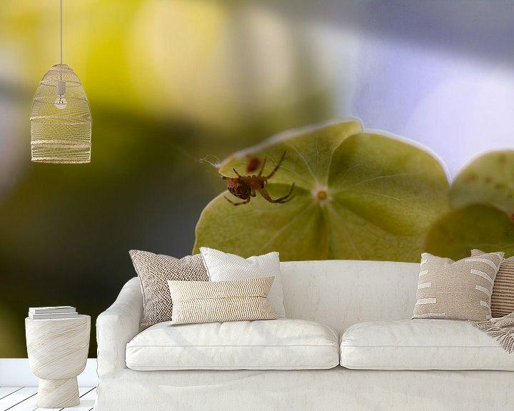 Beispiel fototapete: kleine Spinne von Tania Perneel
