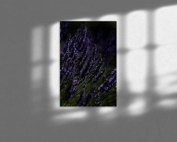 Paars Purple von Esther Swaager ( Studio Toet)