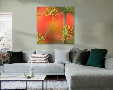 Gele dille boven de rode dahlia bloemen van Daan Hartog