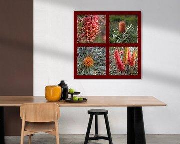 Collage Australischer Wildblumen (Silberbaumgewächse) von Ines Porada
