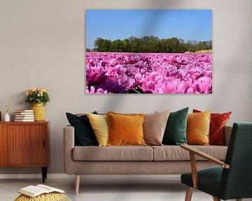 Ein rosa Tulpenfeld von Gerard de Zwaan
