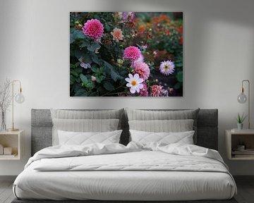 Bunte Dahlienblüten in der Abenddämmerung von Daan Hartog